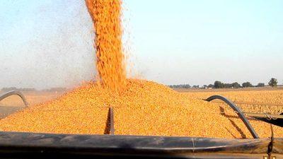 Brasil suspenderá aranceles al maíz y la soja hasta 2021