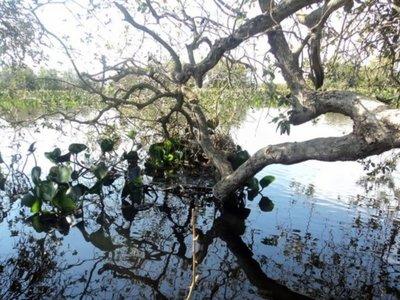 Subió a un árbol para tirarse al río y murió desnucado