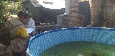 """""""Paraguay sin dengue"""": Continúan la eliminación de criaderos y campañas de concienciación como acciones preventivos"""