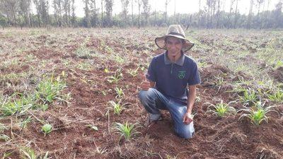 Productores de Alto Paraná ya pueden sembrar maíz luego de las lluvias