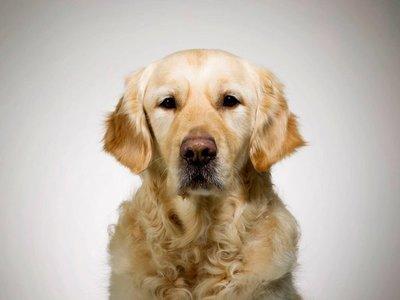 Zenit, el primer doctor canino, está próximo a jubilarse
