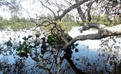 Murió desnucado luego de saltar al agua desde un árbol