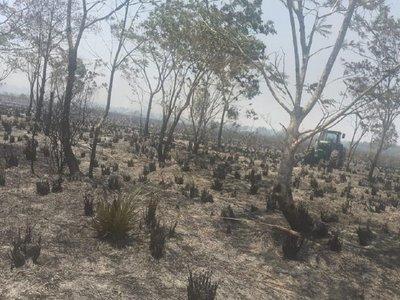 Santa Rita: Incendio consume 50 hectáreas de plantación de trigo y bosque