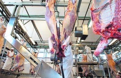 Vacas preñadas a frigorífico: pérdidas económicas en el corto y largo plazo