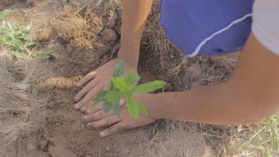 Impulsan campaña de reforestación de Canindeyú