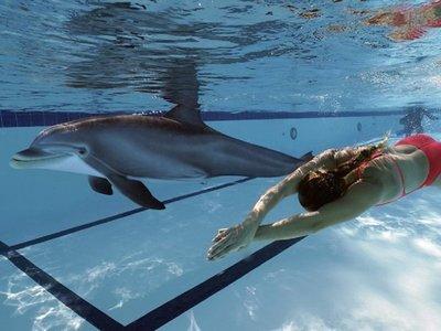 Crean un delfín robótico que podría ayudar a terminar con el cautiverio