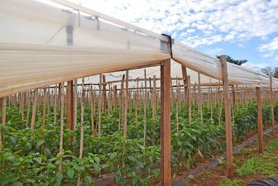 Innovaciones tecnológicas para la horticultura