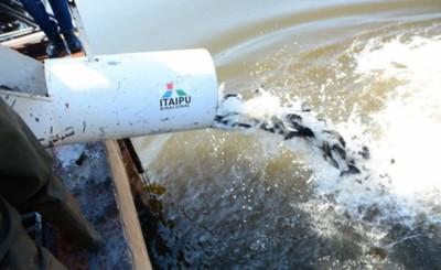 Para mejorar calidad del agua, siembran 7 mil peces en el lago