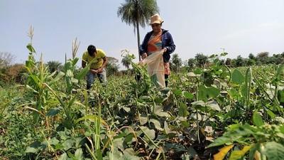 La agricultura familiar como alardeo del gobierno y lamento histórico de empobrecidos labradores
