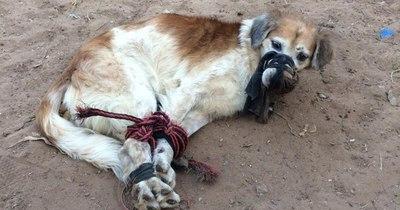 La Nación / Fernando de la Mora: perro fue tirado a un baldío atado y amordazado