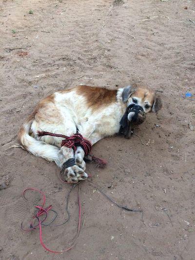Piden pena carcelaria para maltratadores de animales