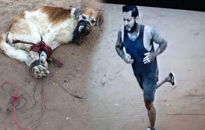Videos dan indicios del presunto maltratador de perro encontrado amordazado