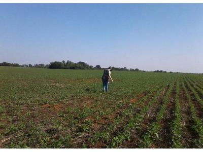 Se paraliza parcialmente la siembra de soja por sequía