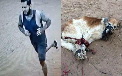 Muestran al hombre que habría tirado a un perro amordazado y atado de patas