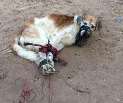 Detienen a presunto agresor de Shelby, el perrito maltratado y amordazado