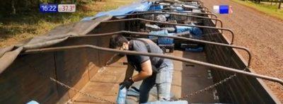 Itapúa: Senad incauta varias toneladas de marihuana en una Scania