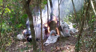 Antinarcóticos destruyen 3.000 kilos de marihuana en Caaguazú