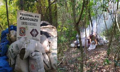 Caaguazú; Destruyen 3 mil kilogramos de marihuana – Prensa 5