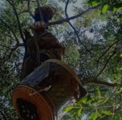 Crónica / Le rescataron a un solitario osito melero
