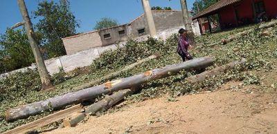 Denuncian tala de árboles en seccional colorada de Caapucú