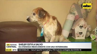 Shelby ya está a salvo y se recupera