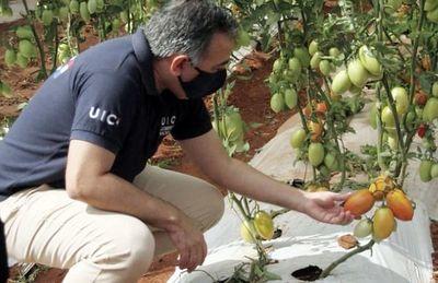 Inician  mayor cosecha de tomate, sandía y otros