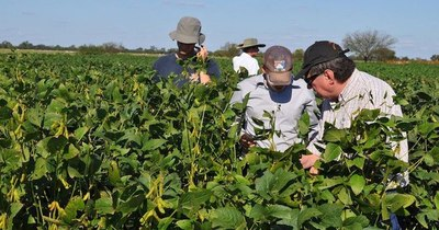 La Nación / Productores de soja no descartan parar siembra debido al suelo seco