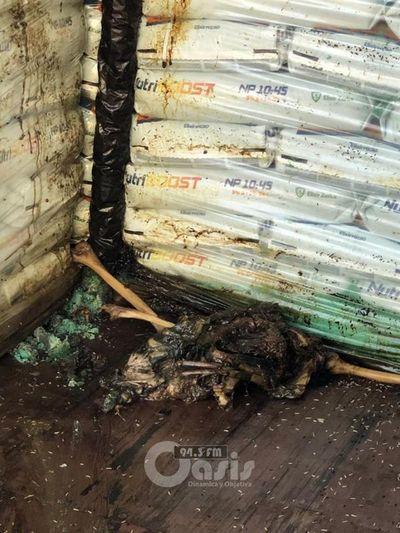 Fiscal investiga el hallazgo de 7 cadáveres en un contenedor proveniente de Serbia