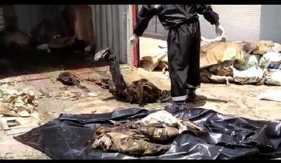 Fiscal investiga si fotografías corresponden a los cadáveres encontrados en un contenedor