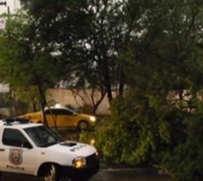 Temporal provoca caída de árbol sobre avenida