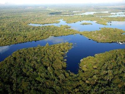 """Expertos detectan """"erosión en la biodiversidad"""" de la selva amazónica"""
