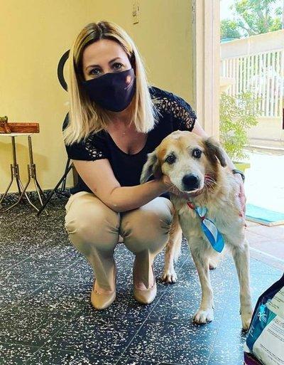 """Shelby está en una veterinaria, bajo cuidado de la Fiscalía: """"Una vez más mintieron"""", dice fiscala sobre Defensa Animal"""