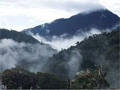 Los bosques de neblina peruanos son reconocidos como reserva de la Unesco