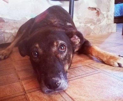 Crónica / Jagua'i se rescató solito, pero necesita la ayuda de todos