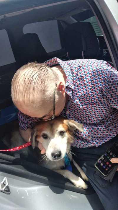 """Caso Shelby: El perrito ya está con su nueva familia y ahora se llama Constantino """"para no recordar su pasado"""""""