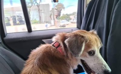 HOY / Perro rescatado tras maltratos, ya tiene un nuevo hogar