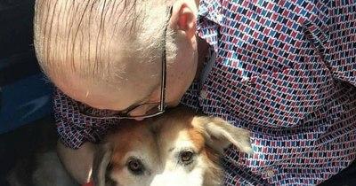 La Nación / Shelby: tras semanas de recuperación, el perro fue adoptado y ahora se llama Constantino
