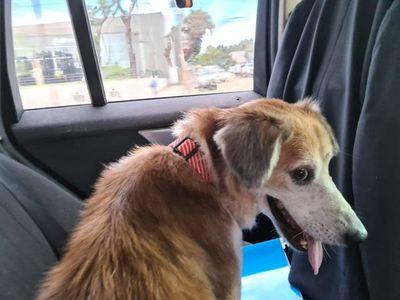 Shelby tiene nuevo hogar: recibirá amor y atención