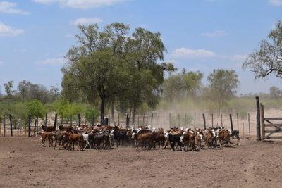 Sequía compromete la futura producción y ganaderos remarcan necesidad de créditos blandos