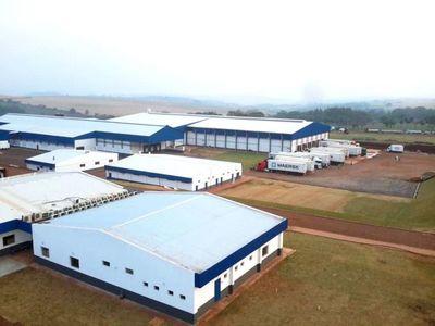 FrigoNorte procesó más de 12 mil cabezas en el primer mes de operaciones