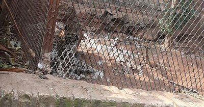 La Nación / Denuncian cautiverio de un animal salvaje en pleno barrio Carmelitas