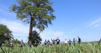 La Nación / Continúa con éxito la medición de los árboles finalistas de Colosos de la Tierra
