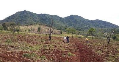 La Nación / Deforestación: Medio internacional se hace eco sobre denuncias