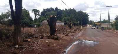 """Lanzan """"Poda Cero CDE"""" y advierten que quienes mutilan árboles serán multados"""