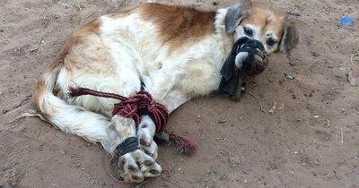 La Nación / Grecia castigará maltrato animal hasta con 10 años de prisión