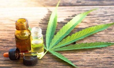 Senado rechazó veto del Ejecutivo a proyecto de ley para uso medicinal del cannabis