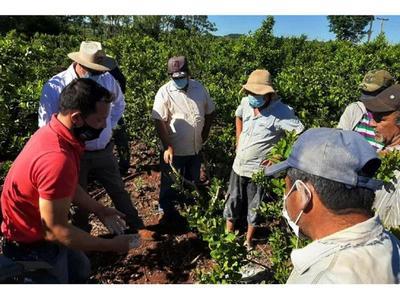 Productores primarios de yerba son  beneficiados en Itapúa
