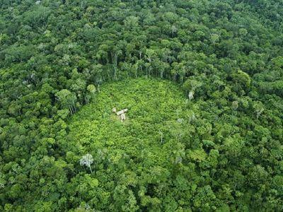 Identifican más de 3.000 especies amenazadas de extinción en Brasil
