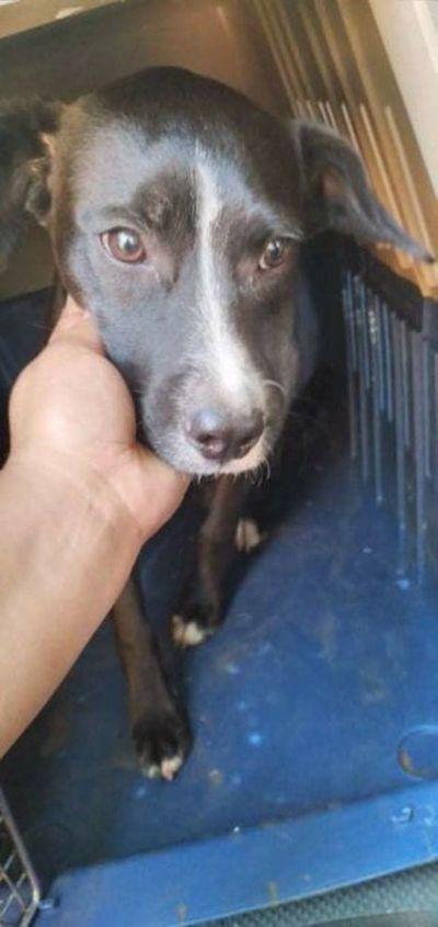 "Rescatan a cachorro que era ""educado"" a patadas por su dueño"