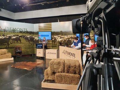 Piemonte vende el sábado 468 cabezas de invernada en feria televisada
